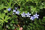 飯豊の花々